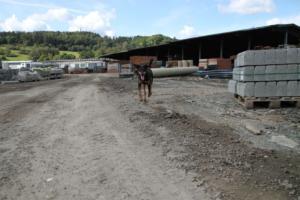 Training Manderbach Lauber 06.09 (54)